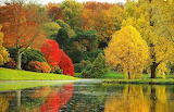 #Stunning UK Autumn