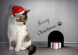 Christmas Cats Winter
