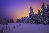 Winter Landscape V
