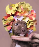 #Puppy Flower Power by Sophie Gamand