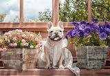 flowers dog 115