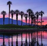 Palm Desert palm trees @sunset