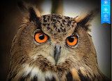 Owl by auricle 99 from magic jigsaw puzzles