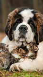 In Safe Paws
