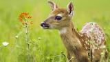 Beautiful-and-cute-animals-wallpaper-23