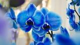 Orhidei 24
