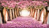 Pink Spring Path