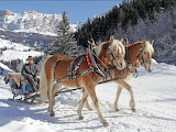 Horse-drawn sleigh-winter-snow-alta badia
