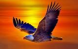 Colours-colorful-eagle-bird-animal-sunset