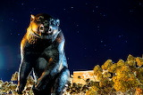 Bear Statue at Night