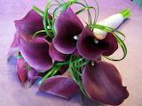 Kala violet