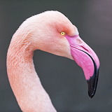 *Pink Profile...