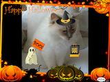 Allie Halloween