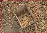^ Raw peanuts