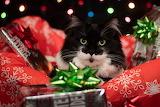 Presents Are Fun