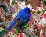 #Beautiful Bird
