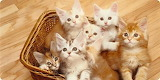 Cats - Basket Of Kittens