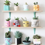 Succulents on shelves