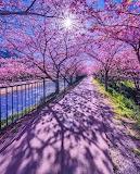 Beautiful walk