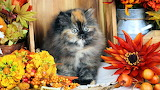 Fall colors kitty