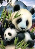 panda`s