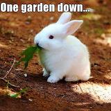 ☺Bunny Eats Gardens...:-D