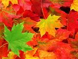 ^ Autumn Leaves