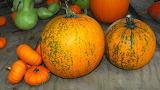#Pumpkins and Gourds