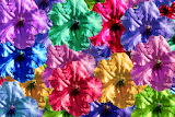 Colours-colorful-flowers-background