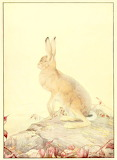 "Madamma Fables Art dogstardreaming ""Edward J. Detmold"" ""The Hare"