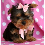 "Potw. ""Pets""-beautiful baby."