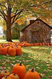 Fall Barn pumpkins