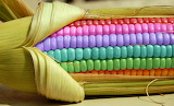 RainbowCorn