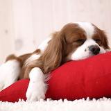 ☺ Puppy having sweet dreams...