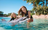 Girl, woman, child, dolphin, water, smile, summer