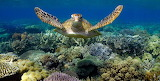 Turtle-reef-e1552495434263-768w