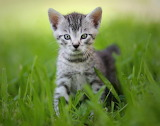 Kitten in the high grass