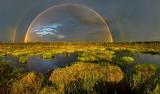 Swamp Rainbow