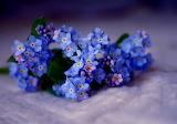 8.violet-life