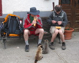 Fellow Pilgrims Share a Meal With Street Cats