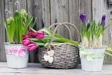 Kwiaty-w-wiaderkach-i-koszyku