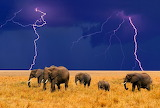150 Elefants - Elephant