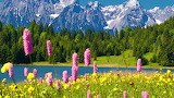 Pink Spring Flowers in the Mountains