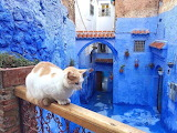 Chefchaouen - THE BLUE PEARL
