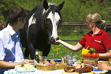 Couple with horse at outdoor lunch