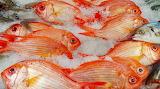 Auckland - Fish Market Pretty Fish