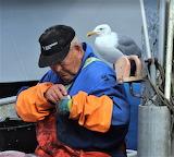 Fisherman with hopeful sea gull