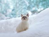 Kitty sitting in the snow