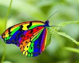 ^ Rainbow butterfly