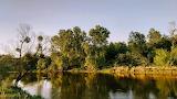 Rzeka Bug w okolicach Włodawy 2